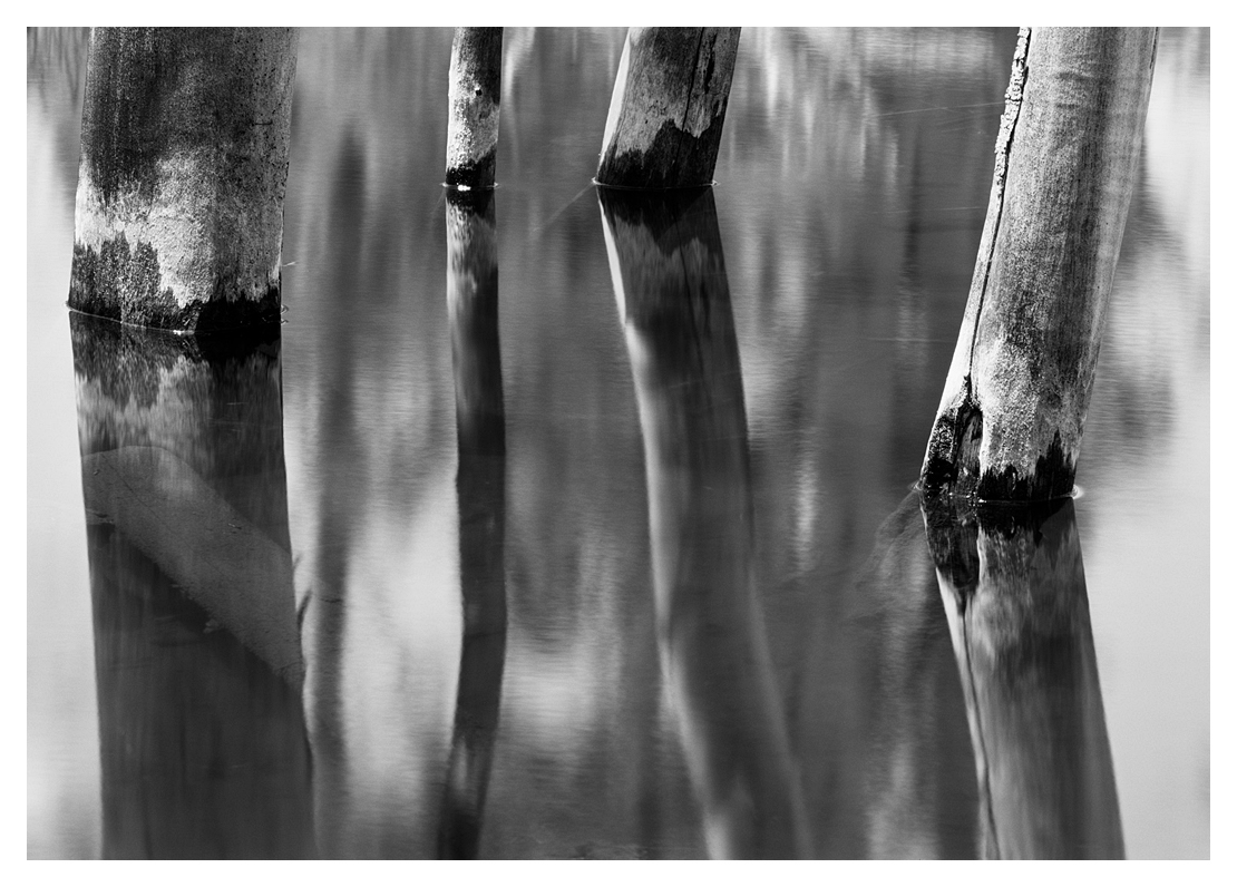 Tree Trunks and Reflections, Eastern Sierra, California, 2009